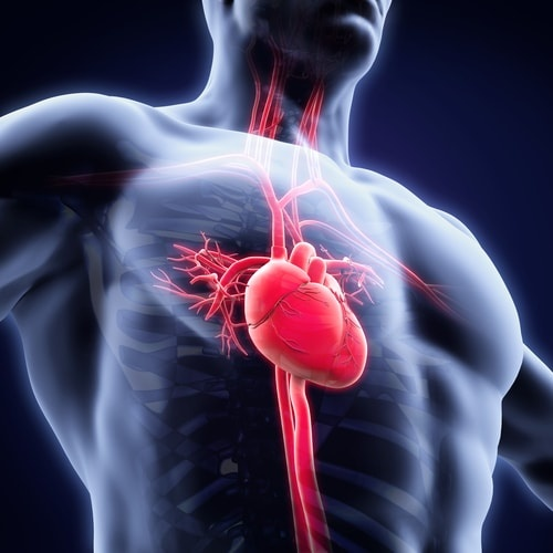 Cardiologie Buzau
